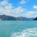 Beautiful Akaroa harbour