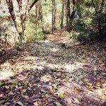 Ayar Jungle Camp Photo