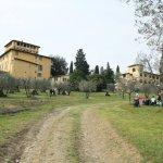 La Fattoria y los olivos