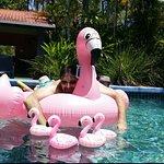 Pink Flamingo Φωτογραφία