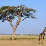 F. King Tours and Safaris - Day Tours Foto