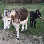 Often get donkeys and ponies outside the pub