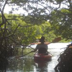 Exiting a Mangrove tunnel