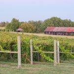 5 Acres of vineyard