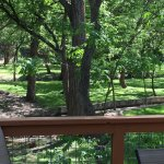 Cypress Creek Cottages Foto