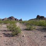 sparse landscape.