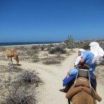 Desert meets beach