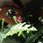 It is wonderful place.You will be able to see butterflies of different sizes and different types