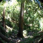 Amazing sequoia trees