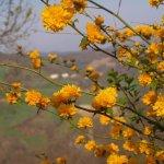 I primi fiori di Primavera