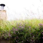 Heather and grass roof on The Smithy