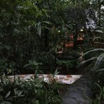 the rainforest surrounding the rooms/cabins