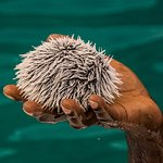 This is a Sea Urchin brought to the surface by Captain Happy