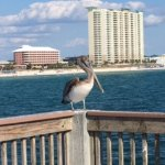 This bird sits there all day and watches the fishermen at the end of the pier.