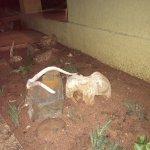 Photo of Kubu Safari Lodge