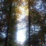 Quand la lumière se faufile à travers les arbres...