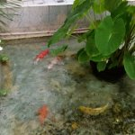 Relaxing smoking with a seating area and koi pond