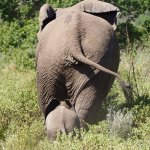 Plenty to see in Kruger