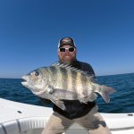 A HUGE Sheepshead caught while fishing with Captain Chuck Griffin
