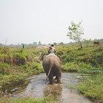 on the way to elephant bath