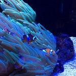 Foto di AQWA - The Aquarium of Western Australia