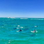 beautiful dolphins swim and play near us