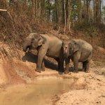 Las dos elefantas estan muy felices. Una de ellas esta embarazada y dará a luz dentro de 6 meses