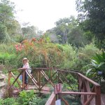One of the garden bridges