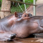 Foto de Hippo Jessica