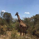 Nairobi Tented Camp รูปภาพ