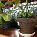 Plants to give the espresso machine company.