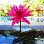 Photo de Flower Garden Hotel
