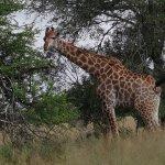 Umkumbe Safari Lodge Εικόνα