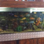 Fish tank inside