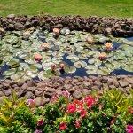 Lotus in the stream