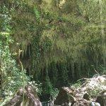Photo de Parque de las Cavernas del Rio Camuy