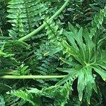 lovely vegetation on the grounds