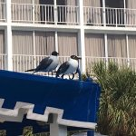 a couple birds looking for any stray french fries on the pool deck