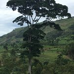 View from restaurant - Amazing tree in shape of Africa