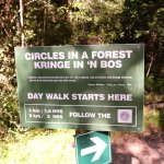 Circles in the Forest