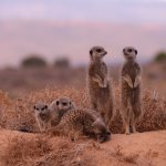 Photo of Meerkat Adventures