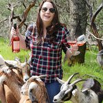 Winemaker Kelly Woods with our herd of goats.