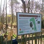 Corton Woods Local Nature Reserve