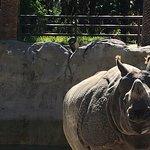 Curious Rhino.