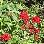 A few butterflies grace the grounds.