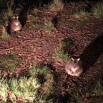 Foto de Lemonthyme Wilderness Retreat
