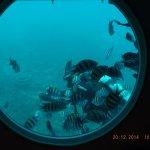 Photo of Odyssey Submarine Voyage of Fantasy