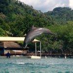 Bailey the Dolphin!