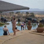 Pool with animals at the watering hole. Sometimes elephants will drink from the pool (reportedly