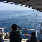 Photo of Whale Watching Mirissa with Geeth